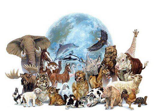 règne animal et réincarnation