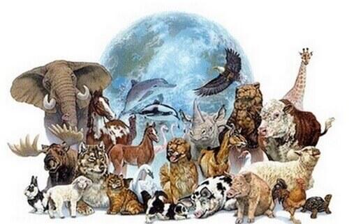 esprit des animaux